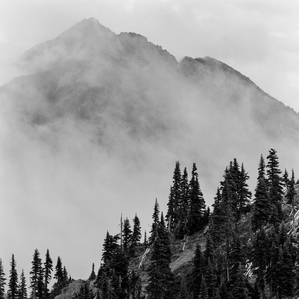 2019: Olympic Peninsula BW