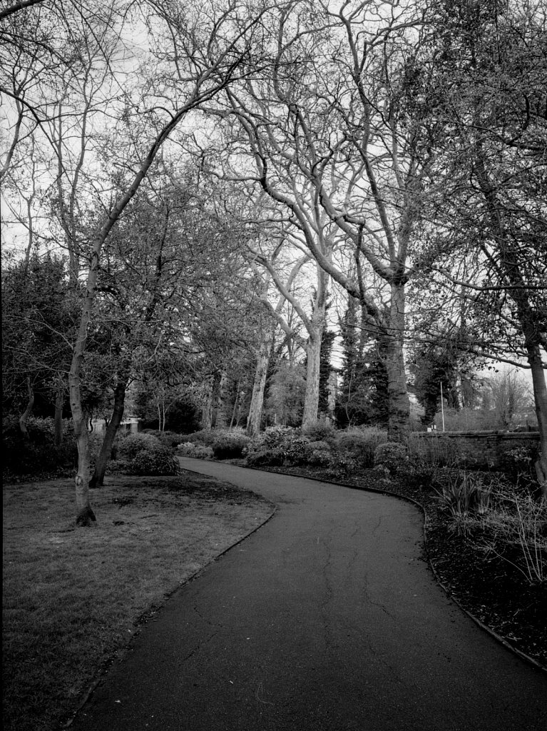 Meander in Waterlow Park